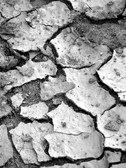 Parched (Pyratqwn) Tags: california bw canon us blackwhite sandiego dry powershot dirt drought cracked parched s5is pyratqwn