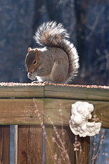 Dinner conversation (apg) Tags: squirrel birdseed deck cherub