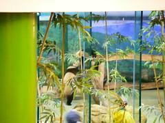 台北市動物園-貓熊館