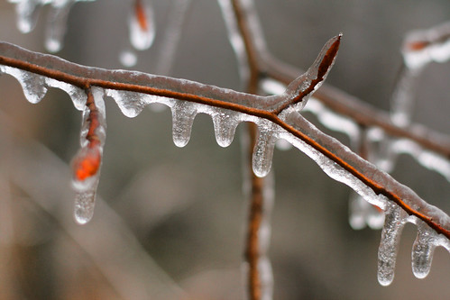 Incased in Ice