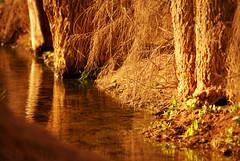 تـراك الصبـح فـي عينـي مـن اول مــا تهجّيـتـك (M ï M ï) Tags: tree green water sony الصبح اول ماتهجيتك