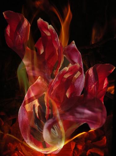Petal Fire by Caroline Yoachim