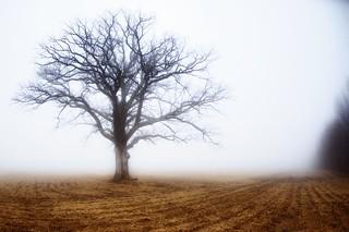 The Tree 51
