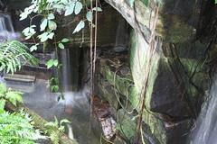 Tiny Falls (kenyaya) Tags: ontario canada canon butterfly rebel niagara xs 1000d