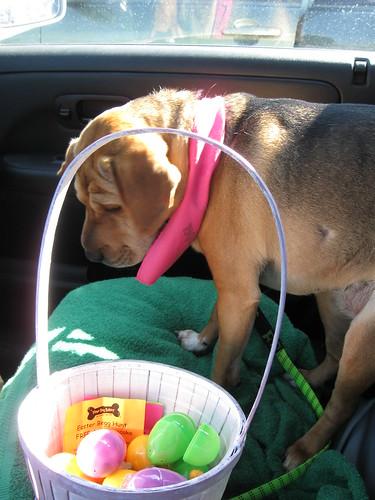 Laney's Easter Egg Hunt