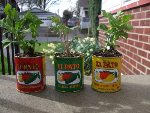 my mini-planters