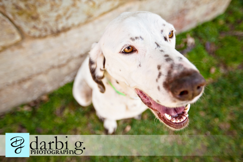Darbi G photography-dog puppy photographer-_MG_9544-Edit