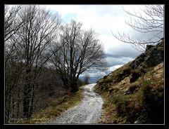 Por el GR 12 desde Velate (Gonzalo Caballero) Tags: españa spain camino bosque haya hayas navarra velate belate gr12