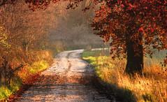 Un p d'autunno (Massimo Feliziani) Tags: road autumn leaf nikon strada mood campagna autunno luce stradina naturesfinest rurale aplusphoto ultimateshot lifebeautiful alemdagqualityonlyclub vosplusbellesphotos piovesemprequindiarchivio