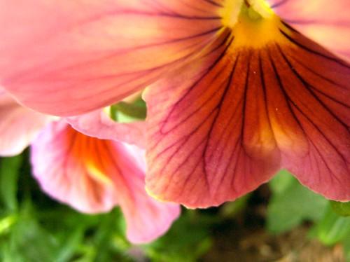 may blooms