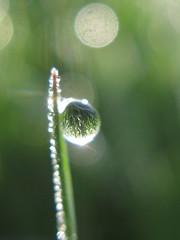 microcosmos (**MIKA**) Tags: grass waterdrop bokeh tau morningglory spiegelung microcosmos tautropfen weltkugel morgenlicht macrocosmos bokehlicious mywinner canong7 macrobokeh microbokeh