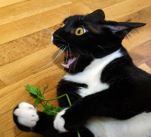 hate parsley yuck i hate parsley
