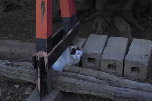 Today's Cat@20090509