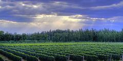 Falta de financiamiento, aumento de energía, costos y retraso en reintegros preocupan al sector vitivinícola