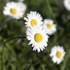 daisy test K02 f/4
