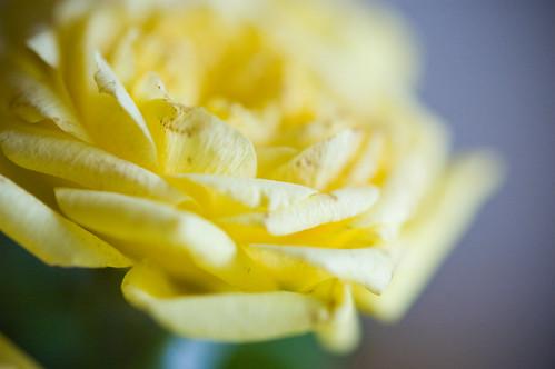 05.13.2009: flowers! (by bookgrl)