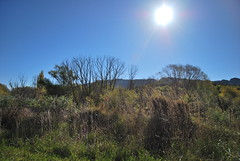 On the road to Maraetotara Falls - Hawke's Bay (Julien   Quelques-notes.com) Tags: newzealand hawkesbay maraetotarafalls