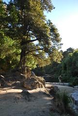 Maraetotara Falls - Hawke's Bay - New Zealand 059 (Julien | Quelques-notes.com) Tags: newzealand hawkesbay maraetotarafalls