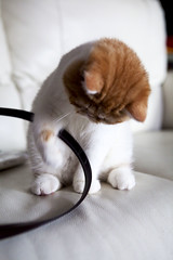 Kitty playing with my purse strap
