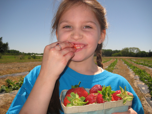 Strawberry Picking-9