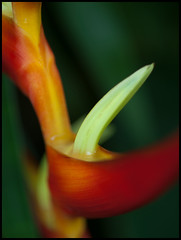 Madrid- Paseo del Prado III (mgarsan) Tags: madrid flower macro primavera spring flor e3 zuiko printemps uro 50mmf2