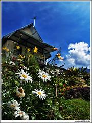 Resort, FLOWERS, Mesilau, Kinabalu and Kundasang - Kiram Village (sam4605) Tags: landscape scenery pemandangan lanskap sam4605
