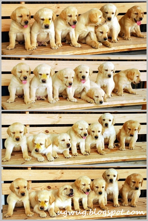 Puppy Power x 7