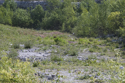 A shot of one of the nearby chalk pits (mostly filled with Birch)