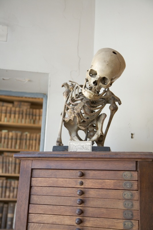 morbid anatomy mus233e dupuytren paris france