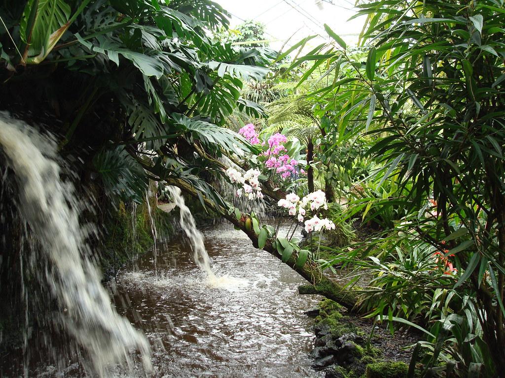 DSC03185 orchideeën tuin