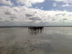 Wadlopen in Westernieland (Johan Koolwaaij) Tags: netherlands celltagged geotagged sunday may groningen wadlopen westernieland cell:mcc=204 cell:mnc=4 cell:lac=37 iyouit iyouitpostprocessed cell:cellid=10223 geo:range=00 geo:lat=53420713 location:dayhour=13 location:maxspeed=80 location:continent=europe location:timezone=1 location:nstep=0 location:nbike=22 geo:long=6489497 location:postalcode=9969 location:street=schaapweg location:distance=135261
