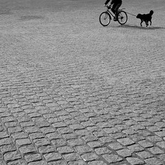 Fischmarkt, Hamburg (difridi) Tags: blackandwhite bw dog bicycle minimal cobblestone hund squareformat sw minimalism minimalistic fahrrad kopfsteinpflaster guessedhamburg difridi guessedbycutter007