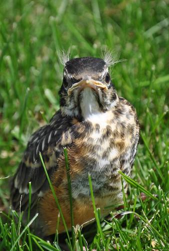 wee bird 008_crop