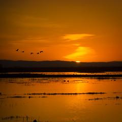 Last Light (Steve Corey) Tags: sunset water birds sandhillcranes losbanos migratingbirds mercednationalwildliferefuge stevecorey