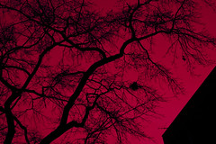 Red Sky at Night (CarbonNYC [in SF!]) Tags: sky tree branches hueshift hueshifted fractal selfsimilarity branching carbonnyc carbonsf