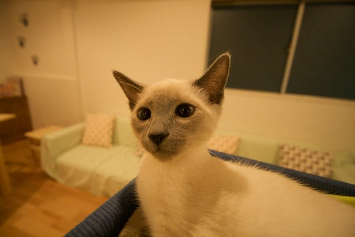 Cat Cafe in Shibuya, Tokyo - Happy Neko