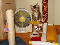 i am Bill Bill baby (davidhuiphoto) Tags: catnipaddicts