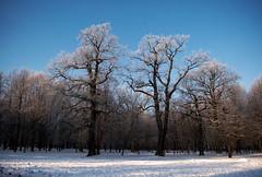 Medžiai (A. Aleksandravičius) Tags: winter frost ne lithuania parkas kaunas d60 lietuva taip nikond60 žiema ne4 medžiai ne2 colorphotoaward ąžuolynas ne3 goldstaraward thebestofday gününeniyisi šerkšnas taip2 taip5 taip7 taip10 taip3 taip4 taip6 taip8 taip9 fotofiltroauksas