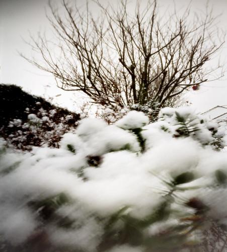 Pinhole image snow and tree 05Feb09