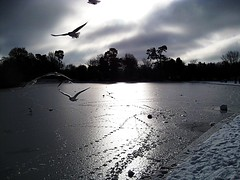 frozen lake st albans (coxy2001) Tags: breathtaking breathtakinggoldaward absolutegoldenmasterpiece