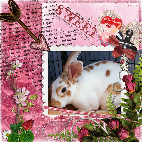 Noisette wishes you HOPPY Valentine Day!