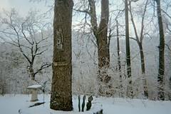 My little Angst People below the Hackberry Tree (junebug_1944) Tags: icestorm eurekaspringsar january2009