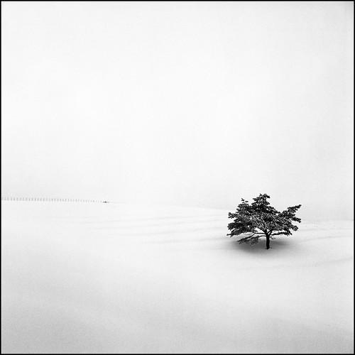snowland #43
