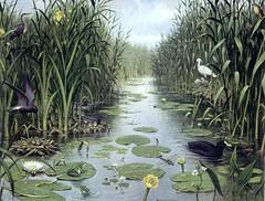 Het Naardermeer-028 (vroomshoop.com) Tags: holland netherlands nederland overijssel dorp vroomshoop kassusa twenterand jankassies