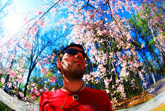 pink blue portrait sky sun selfportrait flower tree me sunglasses self lens spring bright distorted contest rental wideangle fisheye winner pedals 365 bud bold distort d60 365days nikond60 photodoto 365project borrowlensescom nikkor105mmf28gfisheyeafdx