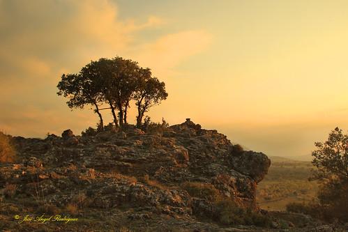 ÁRBOLES SOBREVIVIENDO EN LA ROCA (1)  / TREES SURVIVING ON THE ROCK (1)