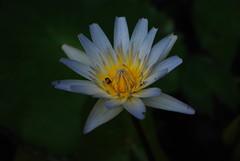 Flor exotica (maidamil) Tags: flora tropical exotica