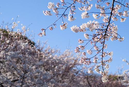 Ueno Park 10