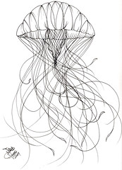 Jellyfish Tattoo Sketch Jellyfish Tattoo Sample Jared
