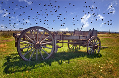 Putting the Cart Before the Birds (Fort Photo) Tags: ranch summer bird history birds animal composite oregon rural photoshop wagon landscape countryside nikon decay farm object wildlife country farming birding transportation multiples princeton historical southeast cart ornithology 2009 blackbirds avian usfws bucolic ranching nwr d300 frenchglenn malheurnationalwildliferefuge johnfrench enfuse seor